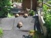 06_MFC_Schildkrötenausflug